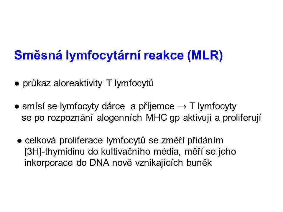 Směsná lymfocytární reakce (MLR) ● průkaz aloreaktivity T lymfocytů ● smísí se lymfocyty dárce a příjemce → T lymfocyty se po rozpoznání alogenních MHC gp aktivují a proliferují ● celková proliferace lymfocytů se změří přidáním [3H]-thymidinu do kultivačního média, měří se jeho inkorporace do DNA nově vznikajících buněk